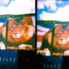 diana-panorama-gate-fuji-rms-4-of-8.jpg