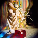 holga-close-up-3-of-15
